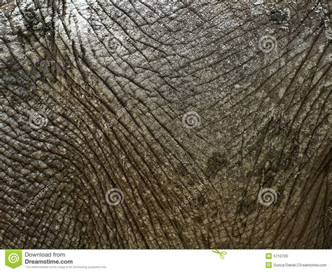 elephant skin in humans picture 10