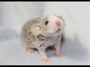 rats-funnybone on male hair removal picture 2