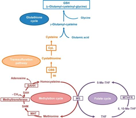 alcoholic liver disease with representation picture 15