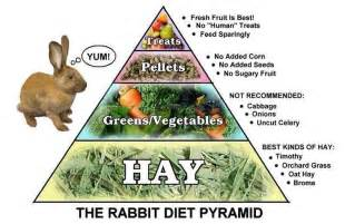 bunny diet picture 7