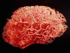 capillaries facts picture 3