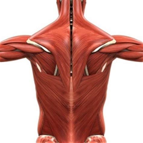 back spasms muscle group picture 9