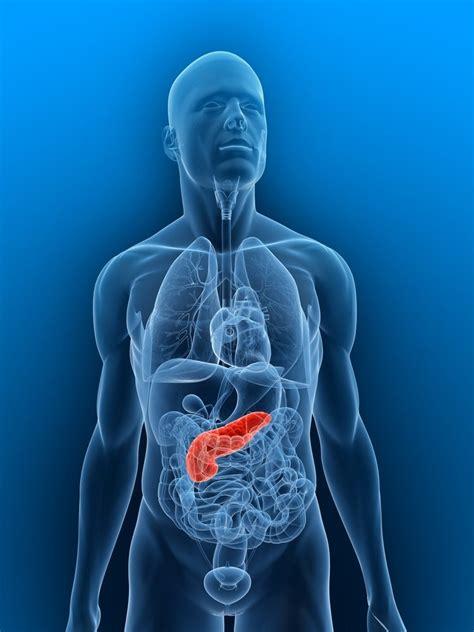 gali bladder picture 3