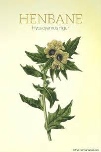 herbal calming picture 9