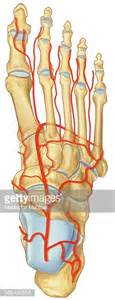 broken bone and blood flow picture 9