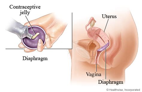 how does penis work inside the vagina picture 2