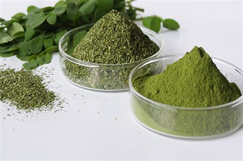 can moringa cure h picture 1