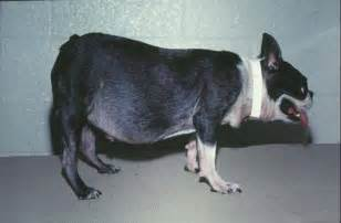 weight loss and cushings picture 3