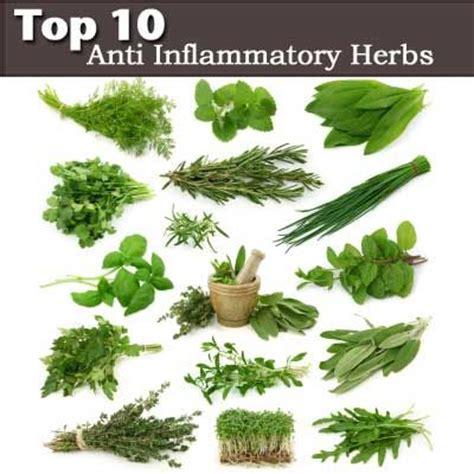 herbal plants anti bulate sa picture 6