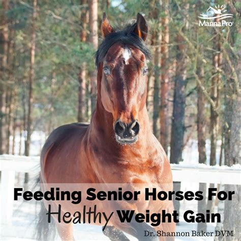 feeding hay to horses weight gain picture 7