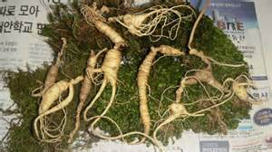ginseng buyers, tennessee picture 2
