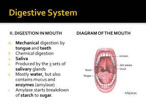 digestive enzymes for tooth whitening picture 10