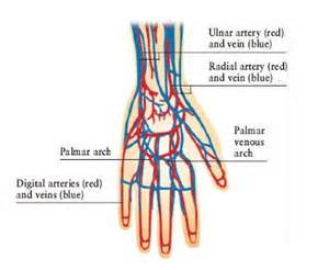 hitting the blood veins in hands what are picture 1