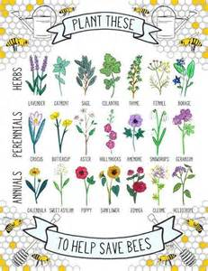 plants and herbs with opiate like effects picture 11