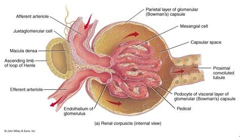 definition of renal diet picture 2