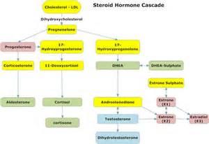 hormone picture 1