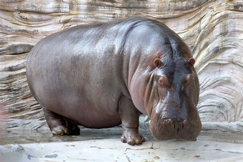 rhino magic diet picture 10
