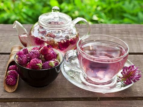 search : info about red clover tea picture 8