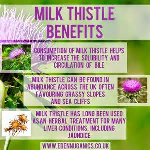 hypothyroid and taking milk thistle picture 7