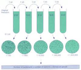 illustration of microbial growth picture 1