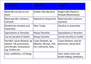 comparison between viral and bacterial diseases picture 17