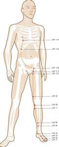 accupressure point for liver picture 13