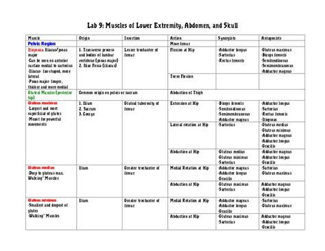 agonist and antagonist muscles list picture 18