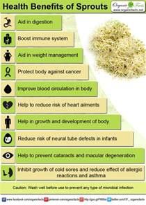 alfalfa health benefits picture 7