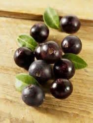 acai berries reserch picture 7