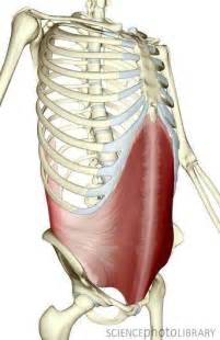 muscle pain in stomach when el movement picture 6