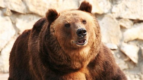 - oral bear men peperonity picture 3