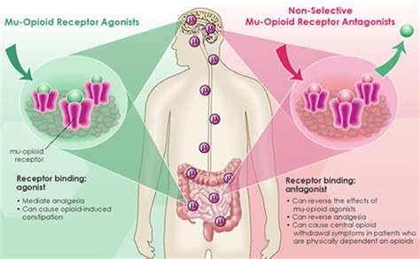 natural ways to stimulate your mu opioid receptors picture 2