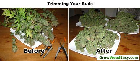 can you smoke marijuana when taking probiotics picture 13