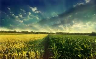 herbal farm hi q plus picture 6
