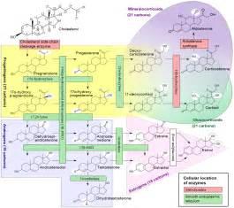 progesterone libido picture 7