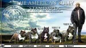 american muscle kennel club picture 3