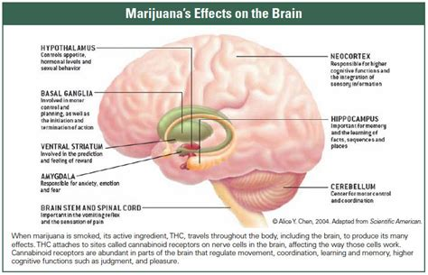 how to cleanse the brain with smoke picture 10