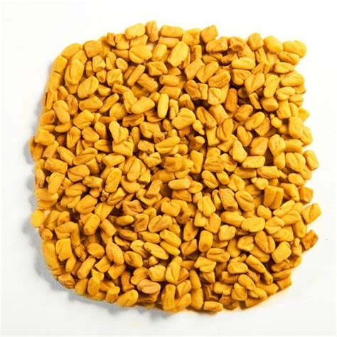 fenugreek seed picture 17