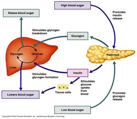 hgh cortisol levels picture 3