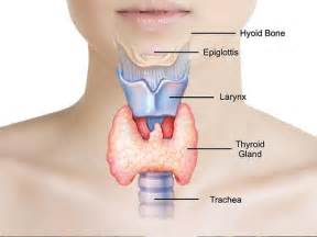 all natural thyroid specialist doctor+illinois picture 3