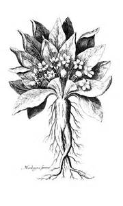 what is the herb that acts as an picture 15