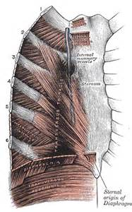 Muscle pain in rib cage picture 5