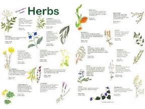 wiccan herbs and their meanings picture 7