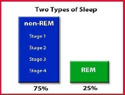 non rem sleep picture 6