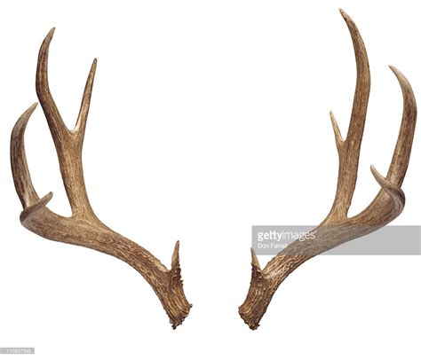antler picture 5