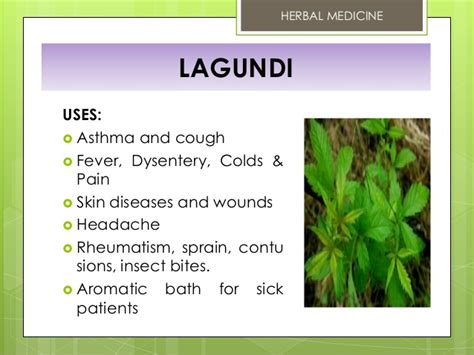 herbal plants and their scientific name picture 2