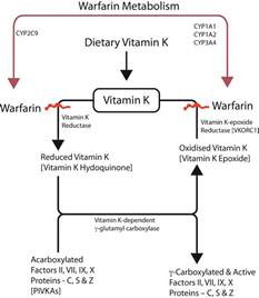 buy vitamin k without prescription picture 1