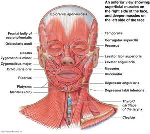 ache muscles picture 2