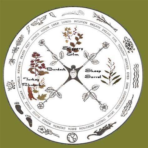 Ojibwa herbal tea picture 9