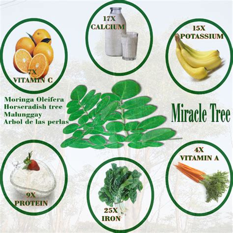 does moringa cure hiv picture 2